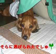 CIMG8749.jpg