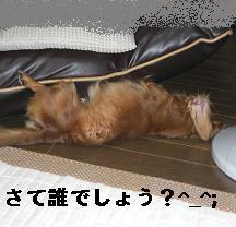 CIMG8932.jpg