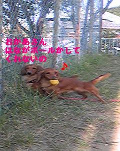 Image677.jpg