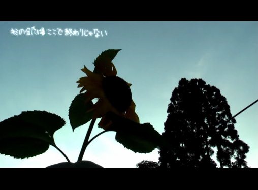 mizunasu2.jpg