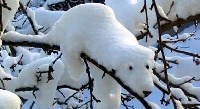 snow-bear.jpg