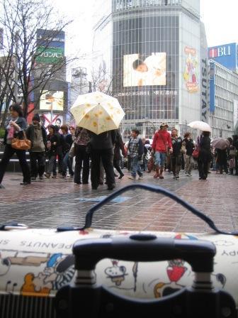 渋谷3(10週齢)