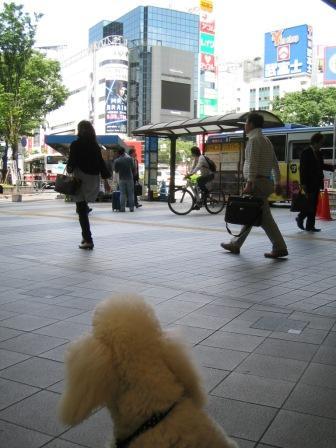 渋谷(4ヶ月齢)