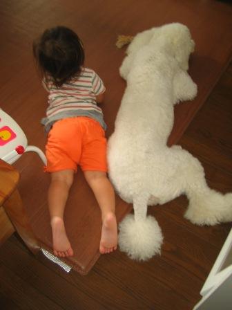 タンポポと侃南(8ヶ月齢)