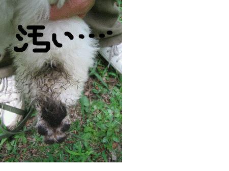 snap_stanputampopo_200980195342.jpg
