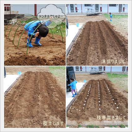 家庭菜園芋