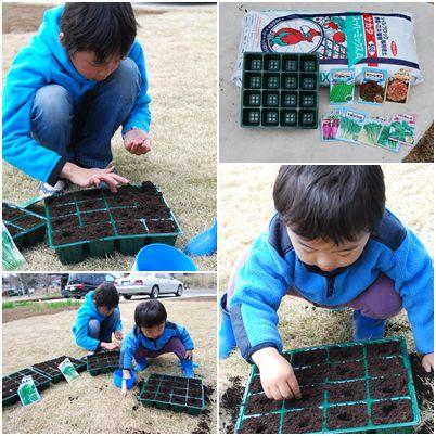 家庭菜園播種