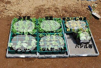 野菜植える