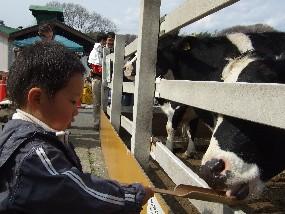 牛にごはん