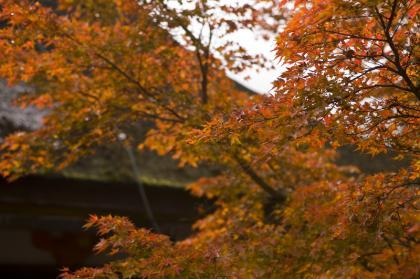 奈良へお出かけ-談山神社