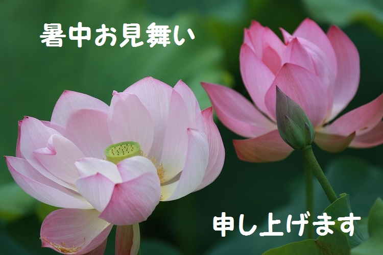1Q3V124411111.jpg
