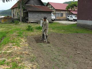 とうきび草削り