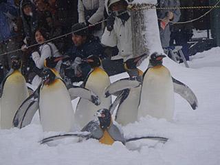 08 ペンギンの散歩