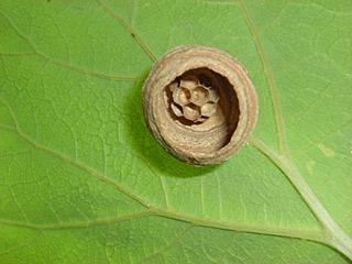 090609 蜂の巣1
