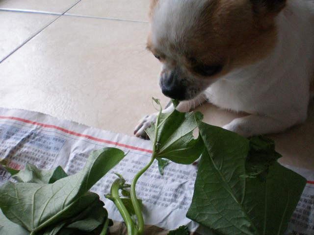 野菜泥棒3