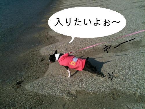 今日のタルト海2