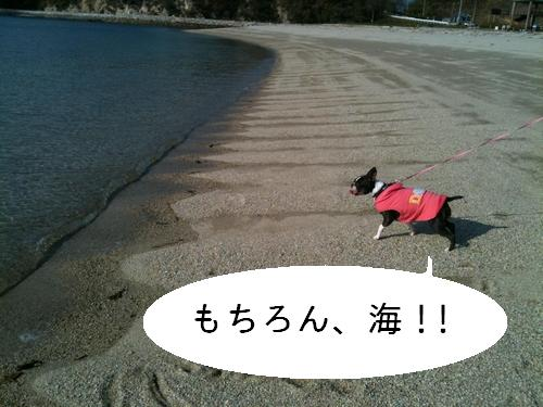 今日のタルト海3