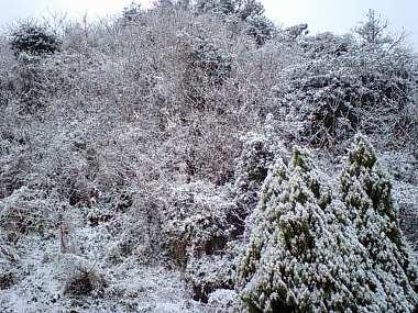 20090124福岡雪