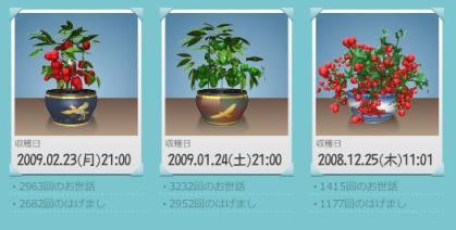 収穫アルバム01