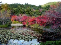 龍安寺 鏡容池(きょうようち)