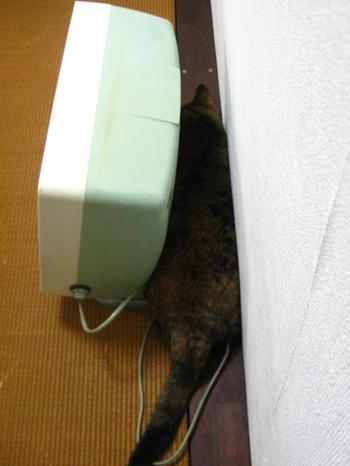 kaminari7_convert_20090808151043.jpg
