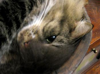 momonga3_convert_20090830155439.jpg
