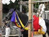 2009 9 13 上総一ノ宮十二社祭り 016_R