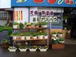 直売所前の花