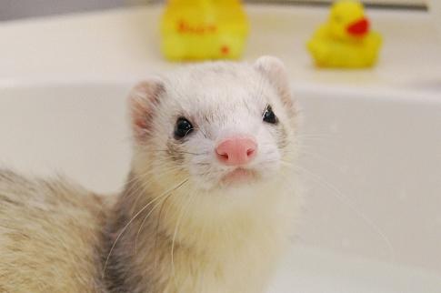 たろうちゃんお風呂写真1