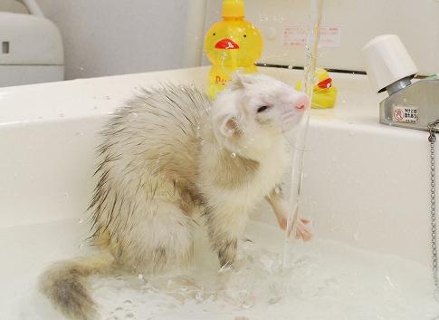 たろうちゃんお風呂写真4