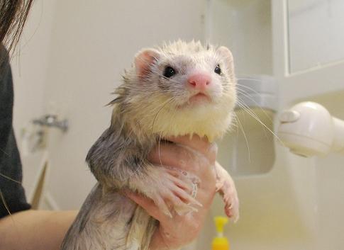 たろうちゃんお風呂写真7