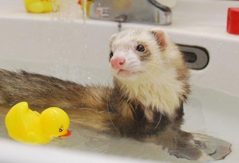 ももたんお風呂写真3