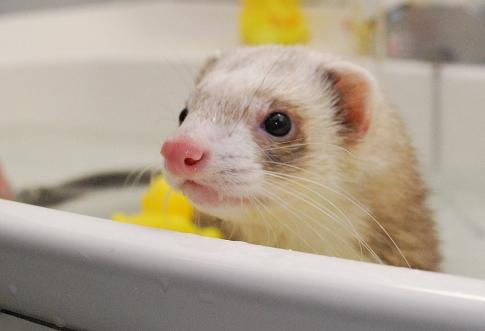 ももたんお風呂写真4