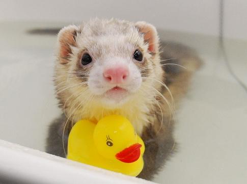 ももたんお風呂写真