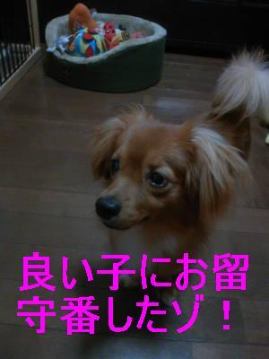 0513_20081010000427.jpg