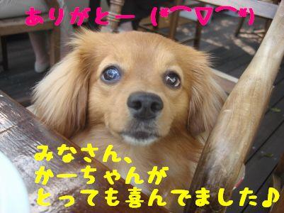 DSC019840055.jpg