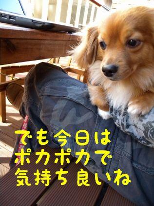 DSCN10370055.jpg