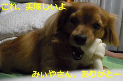 DSCN2163_20081204234503.jpg