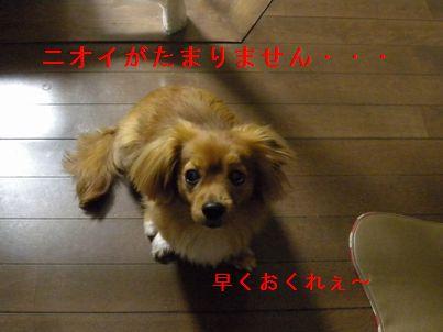 DSCN2662(1).jpg
