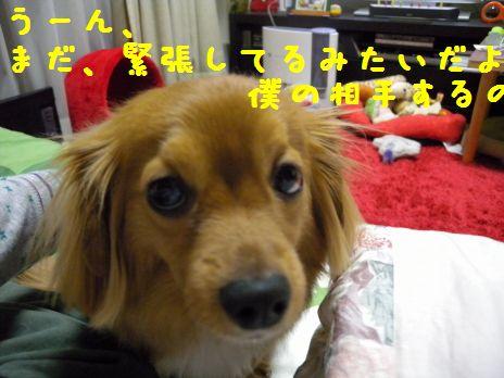 DSCN39590055.jpg