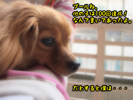 P53040060055.jpg