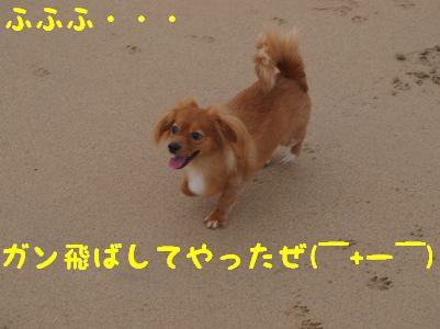 P91454620055.jpg