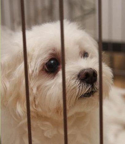 lovelydog2.jpg