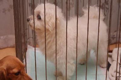 lovelydog3_20081024224818.jpg