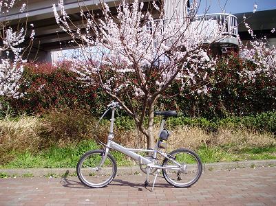 090331桜ヘリオス