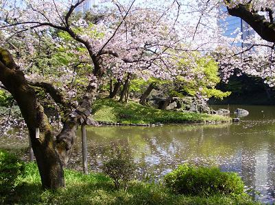 090410後楽園池桜