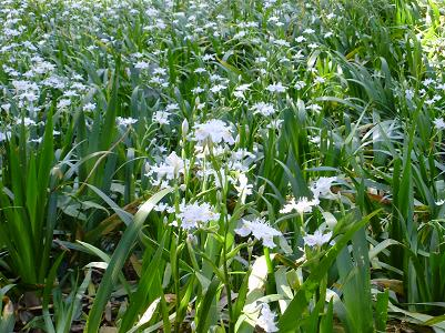 090410後楽園白花