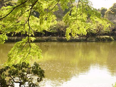 090410後楽園緑
