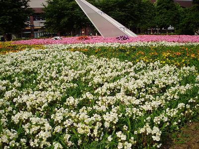 090619花壇