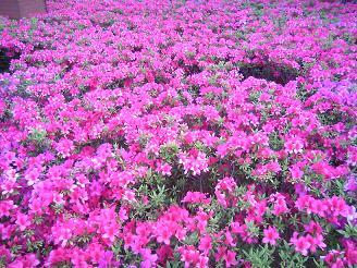 090710花壇